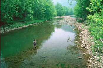 Who hates trout rivers for Elk river wv trout fishing